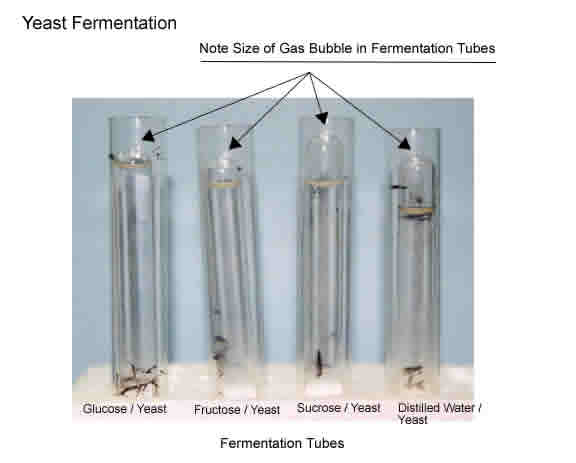 Fermentation lab report